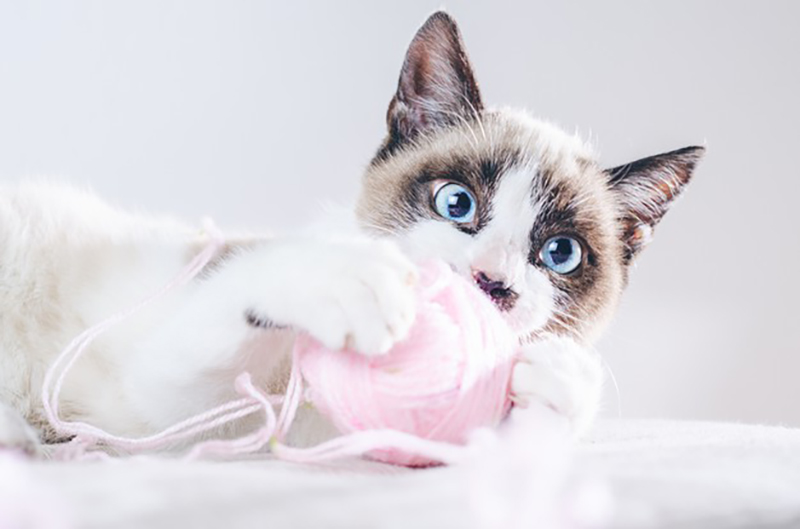myths about cat health insurance