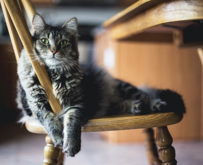 Common health problems IN PETS