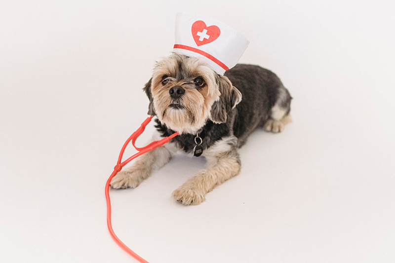 routine care in your pet insurance plan