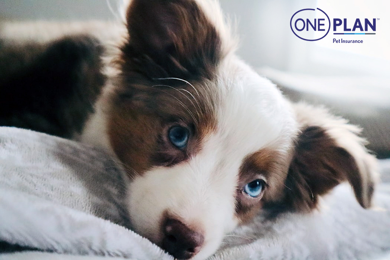 A Comprehensive Review Of Oneplan Pet Insurance