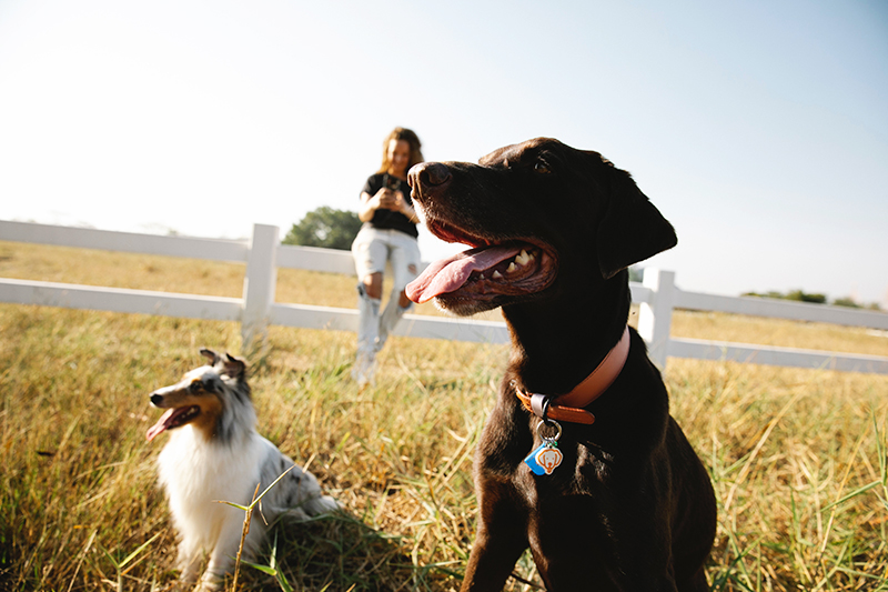 mistakes first-time pet insurance owners make