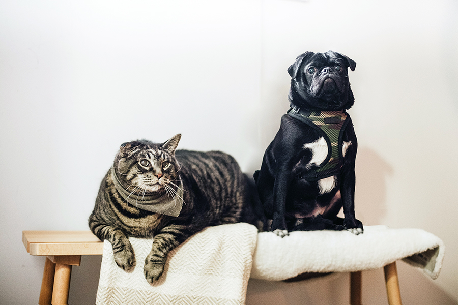 Ask About Pet Insurance